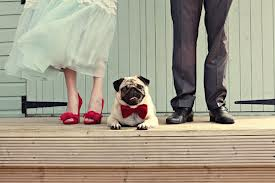 6. Let Man's Best Friend Be The Ring Bearer