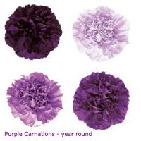 8. Purple Carnation