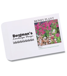 3. Money Plant Seed Packet