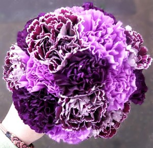 7. Simply Beautiful Carnations