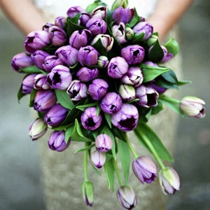 9. Tulips in Shades of Purple