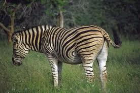 10. An Exotic Safari