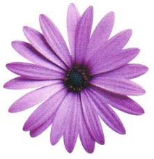 10. Purple Daisy