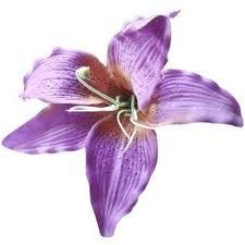 5. Purple Lily