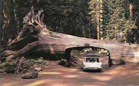 2. Redwood Forest, California